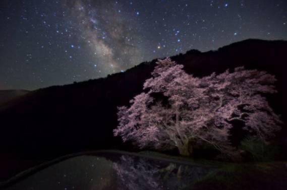 天の川の駒つなぎの桜
