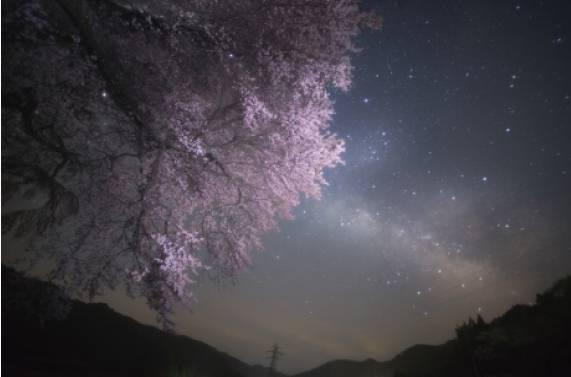 天の川の駒絢爛銀河の桜花(さくらばな)