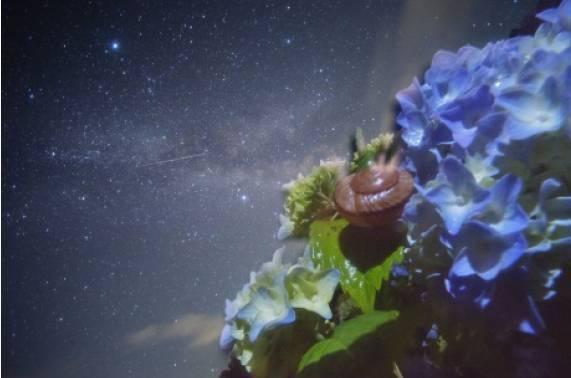 流星のカタツムリと紫陽花