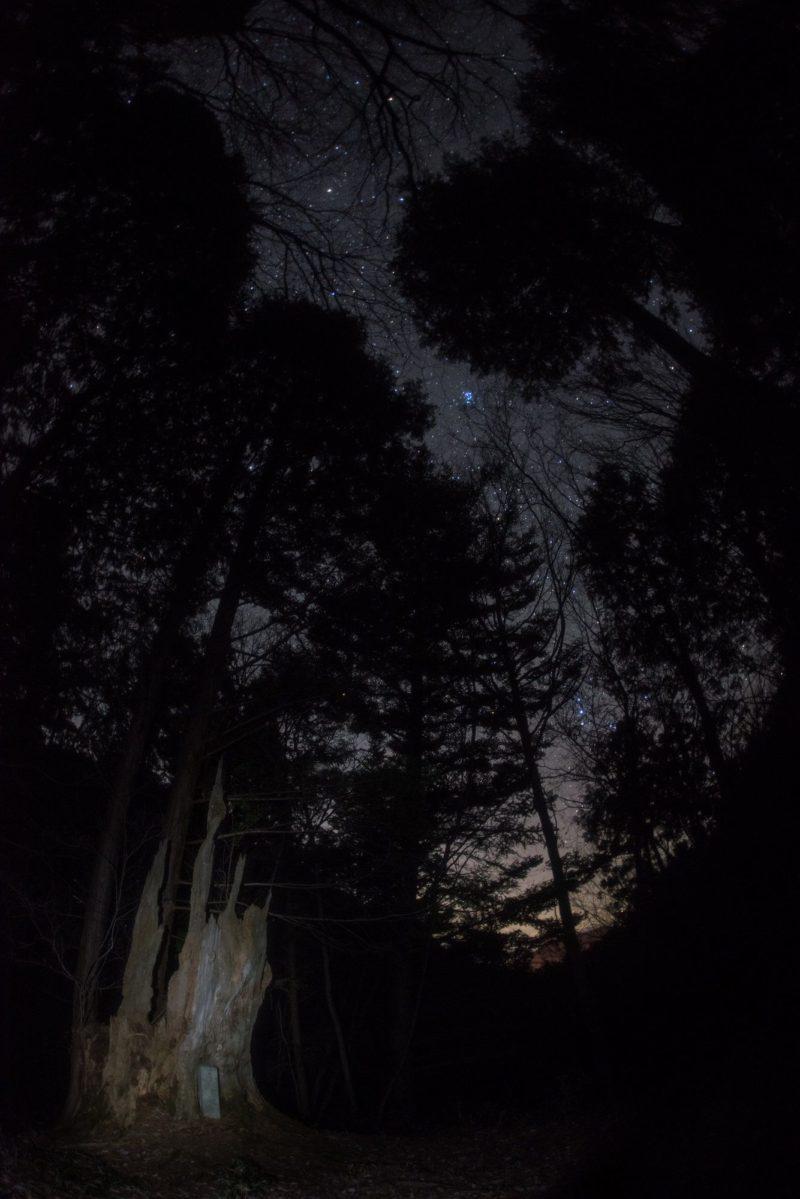 【11月】天空の冬星座と帚木(ははきぎ)